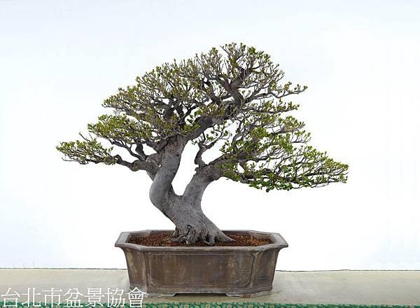 3D06-4676-象牙樹-許錦全.jpg