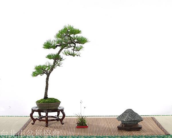 銅牌-赤松.新竹黑石-李信寬.jpg