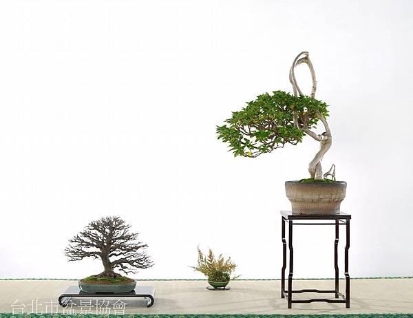 張瑞陽-櫸樹.九重葛.jpg