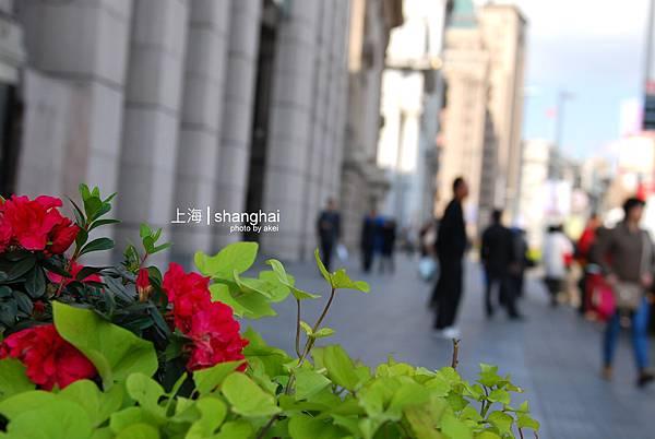 shanghai010.jpg