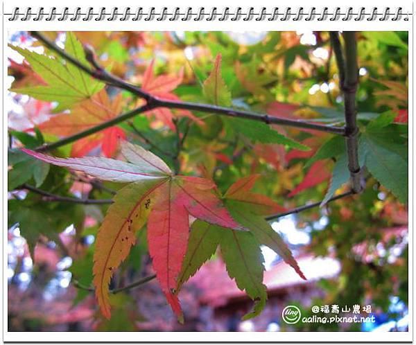 IMG_2130.jpg