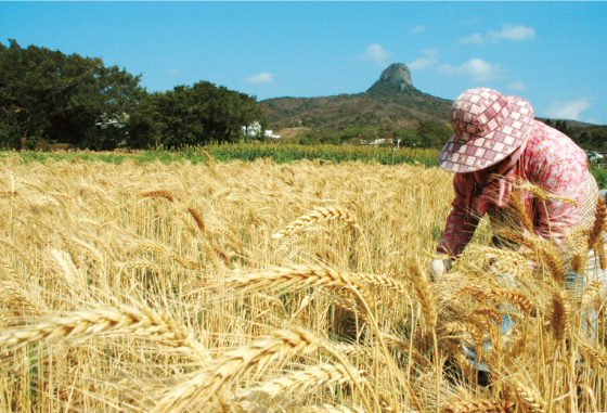 wheat-DM-back-10