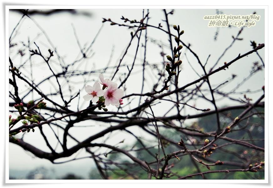 105淡水天元宮6.jpg