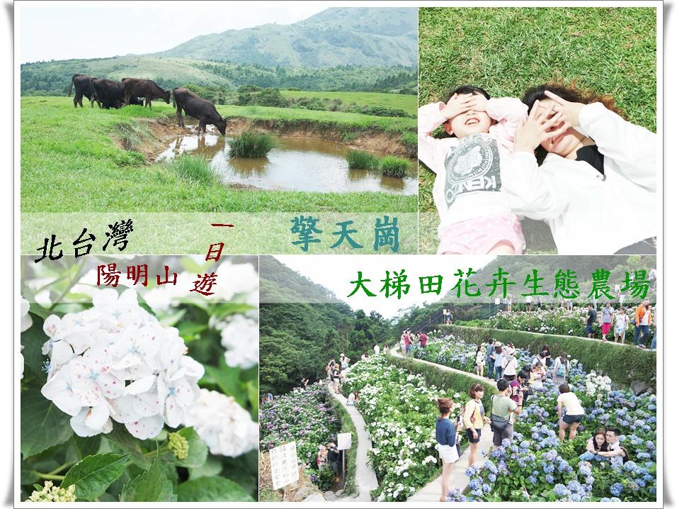 1050529陽明山擎天崗竹子湖大梯田5.jpg