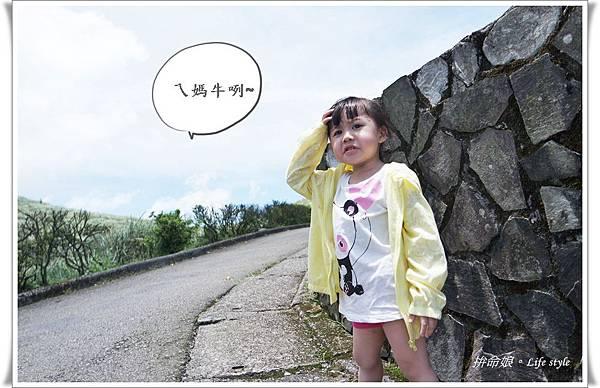 1050529陽明山擎天崗竹子湖大梯田1.jpg