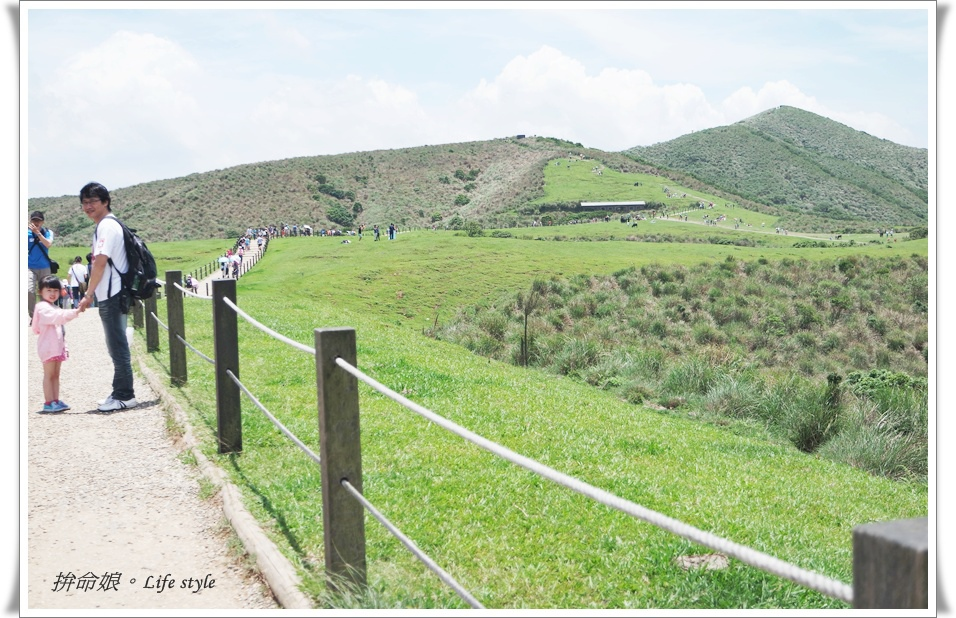 1050529陽明山擎天崗竹子湖大梯田2.jpg
