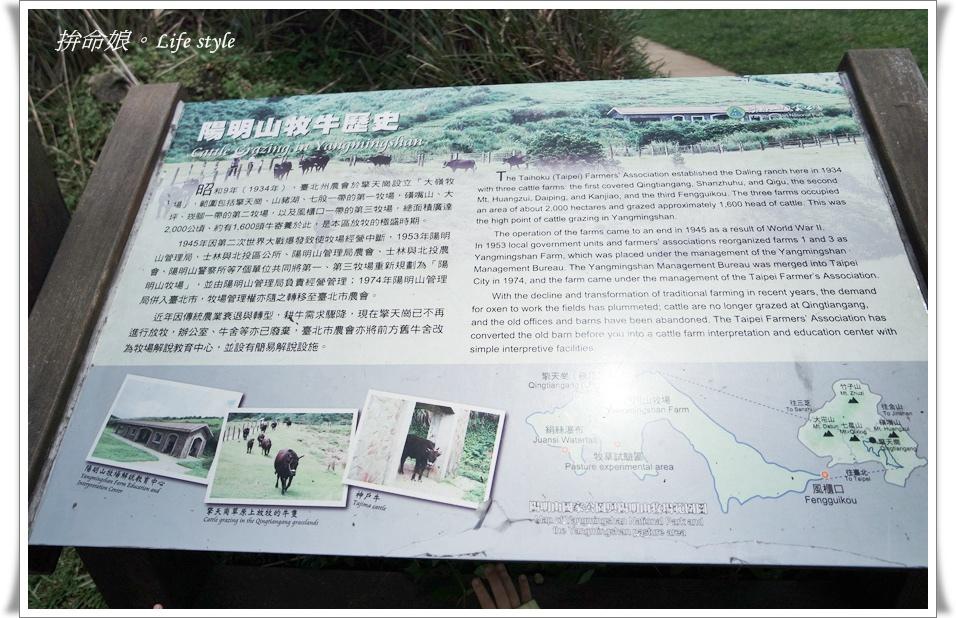 1050529陽明山擎天崗竹子湖大梯田7.jpg