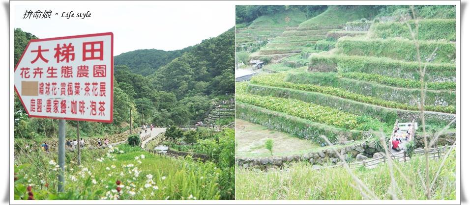 1050529陽明山擎天崗竹子湖大梯田14.jpg
