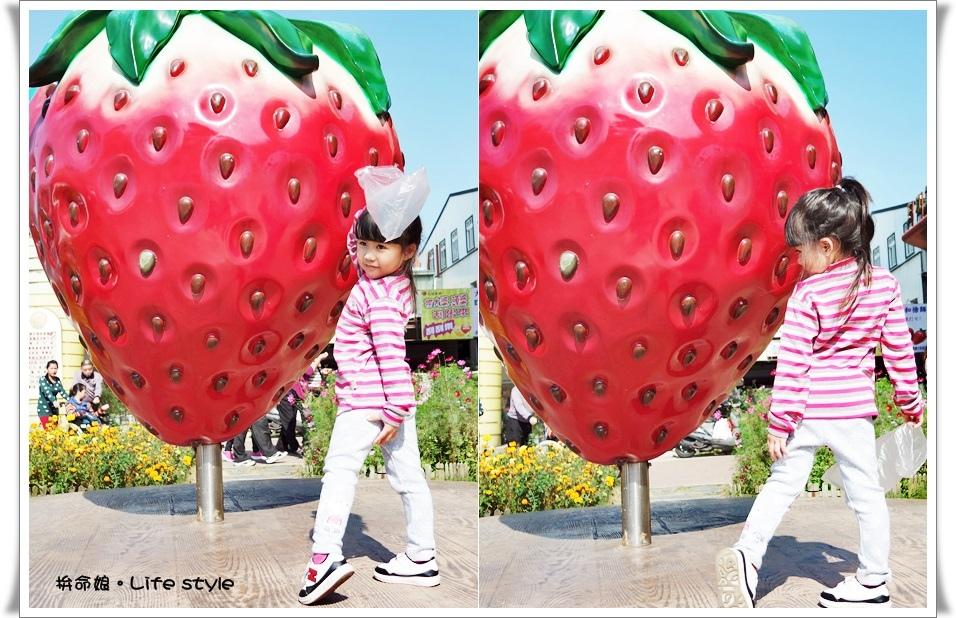 苗栗 大湖草莓2.jpg
