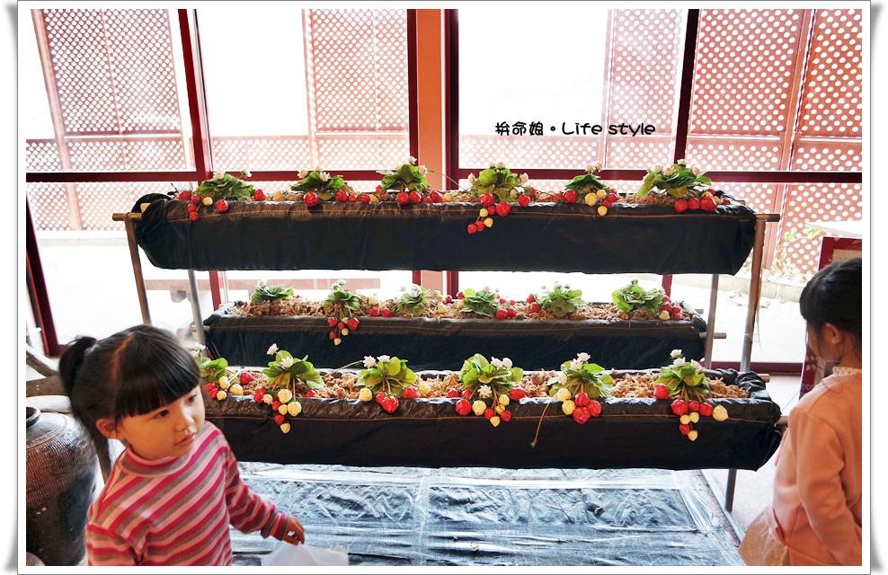苗栗 大湖草莓7.jpg
