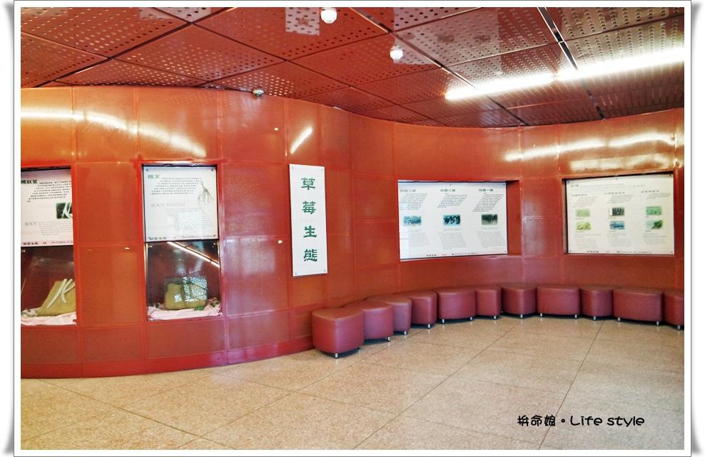 苗栗 大湖草莓8.jpg