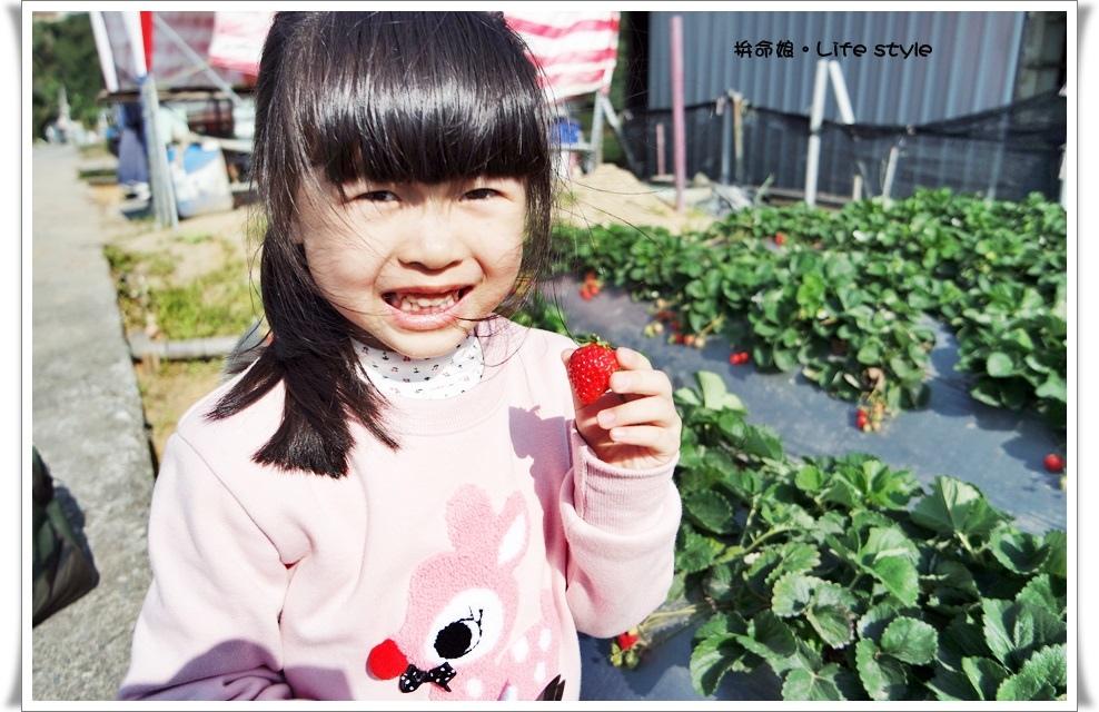 苗栗 大湖草莓17.jpg