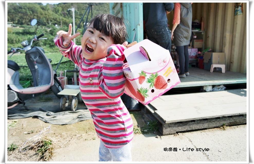 苗栗 大湖草莓19.jpg