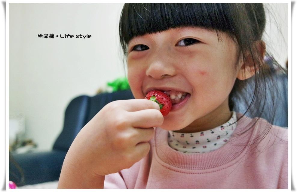 苗栗 大湖草莓23.jpg