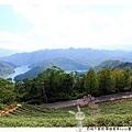 石碇千島湖.順益茗茶by小雪兒1020929IMG_8677.JPG