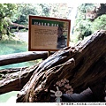 親子旅遊第二天杉林溪1020820By小雪兒1020820IMG_2368.JPG