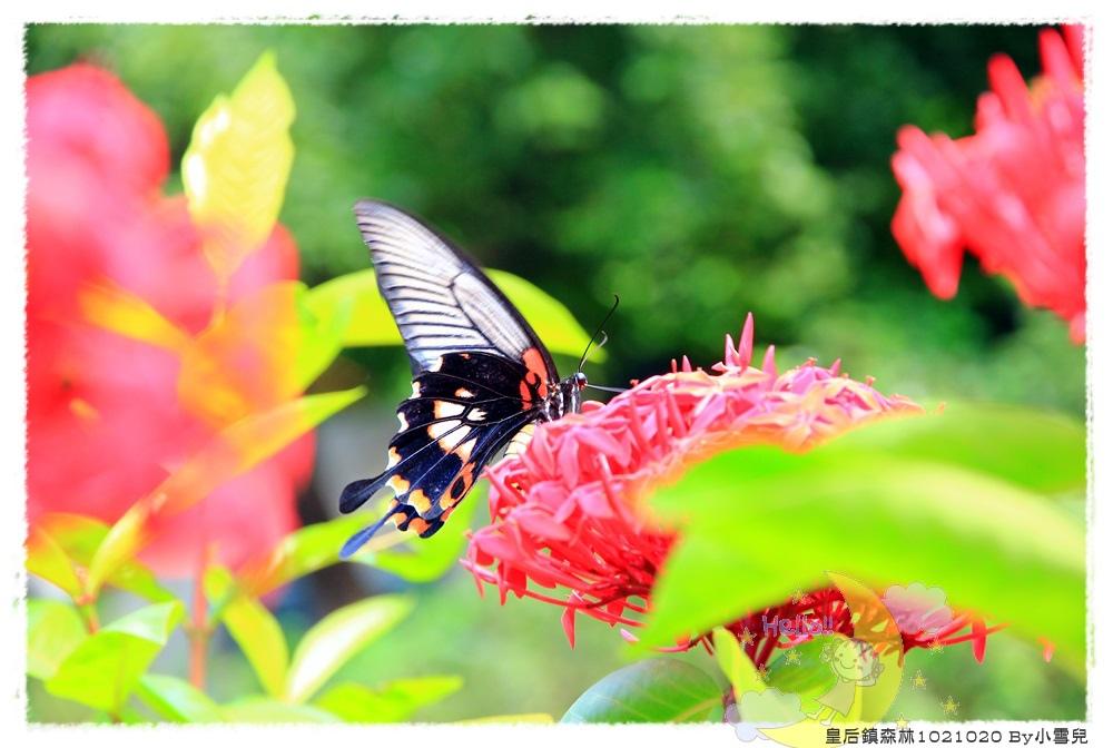 皇后鎮森林1021020 By小雪兒IMG_9144.JPG