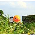桃園黃色小鴨by小雪兒1021031IMG_0034.JPG