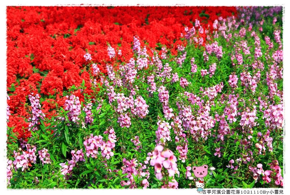 古亭河濱公園花海1021110By小雪兒IMG_0292.JPG