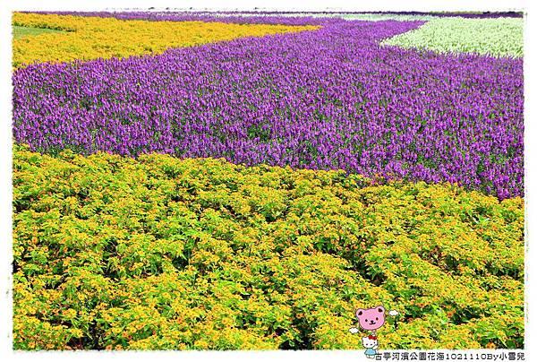 古亭河濱公園花海1021110By小雪兒IMG_0293.JPG