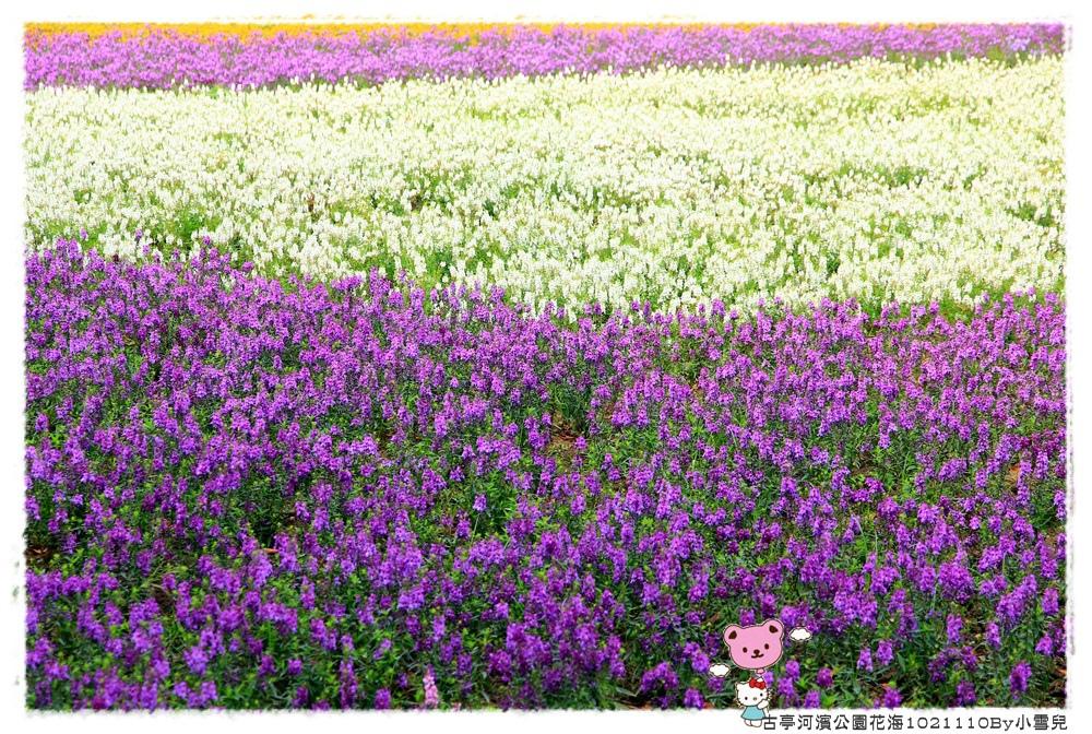 古亭河濱公園花海1021110By小雪兒IMG_0347.JPG