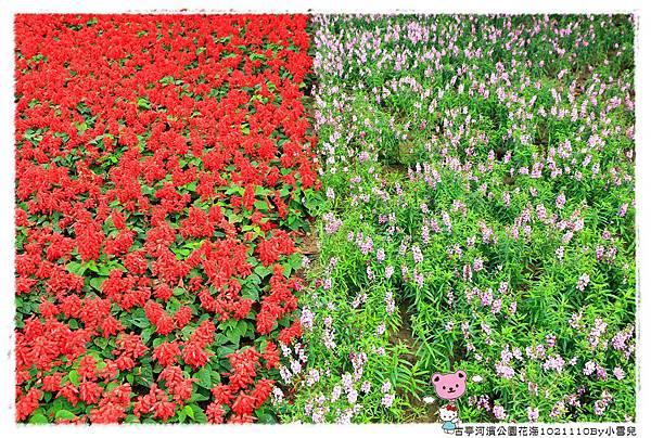 古亭河濱公園花海1021110By小雪兒IMG_0354.JPG