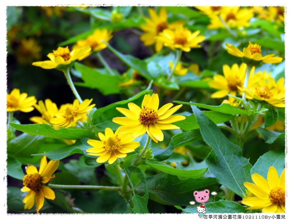古亭河濱公園花海1021110By小雪兒IMG_5167.JPG