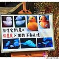 2013蘆竹花海節1021117By小雪兒IMG_0520.JPG