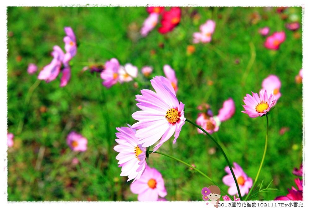 2013蘆竹花海節1021117By小雪兒IMG_0597.JPG