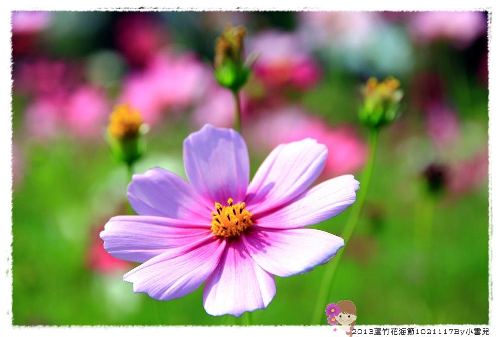 2013蘆竹花海節1021117By小雪兒IMG_0611.JPG
