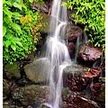 2013年暑假溪頭園區1020821By小雪兒IMG_6796.JPG