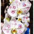 2013花卉裝置藝術設計大展1021201By小雪兒IMG_1503.JPG