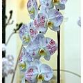 2013花卉裝置藝術設計大展1021201By小雪兒IMG_1504.JPG