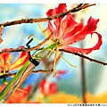 2013花卉裝置藝術設計大展1021201By小雪兒IMG_1516.JPG