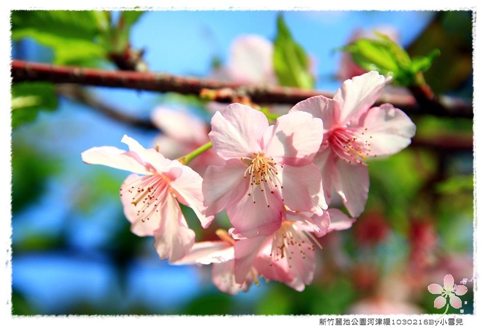 新竹麗池公園河津櫻1030216By小雪兒IMG_3414.JPG