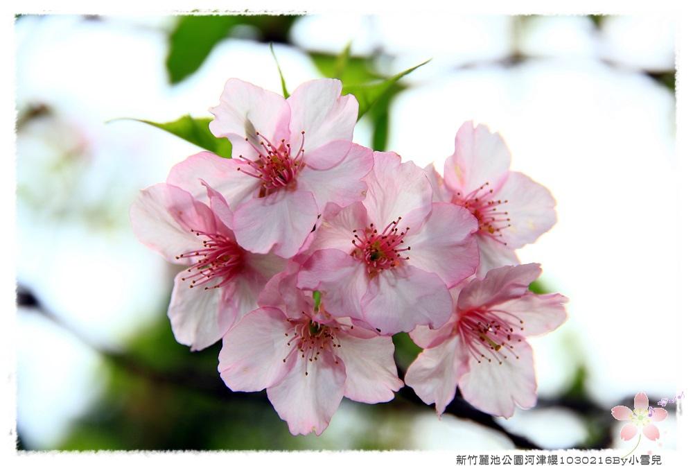 新竹麗池公園河津櫻1030216By小雪兒IMG_3509.JPG