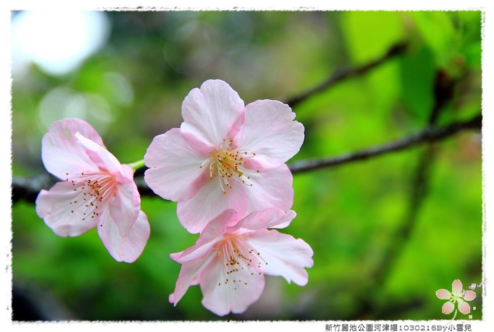 新竹麗池公園河津櫻1030216By小雪兒IMG_3511.JPG