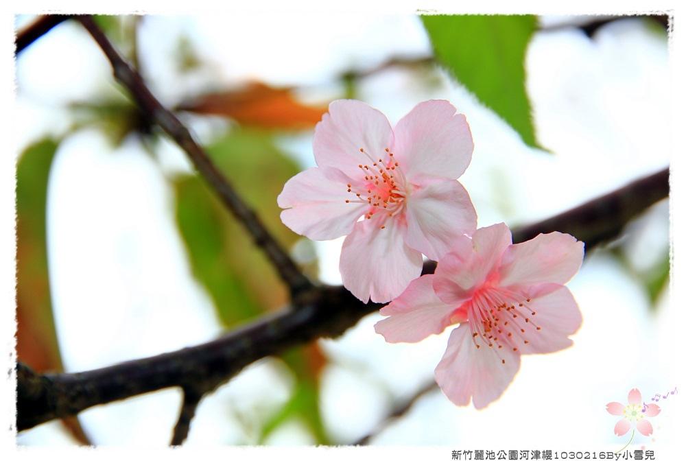 新竹麗池公園河津櫻1030216By小雪兒IMG_3563.JPG