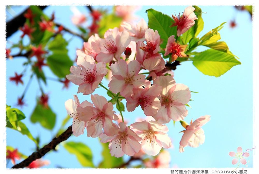 新竹麗池公園河津櫻1030216By小雪兒IMG_3601.JPG