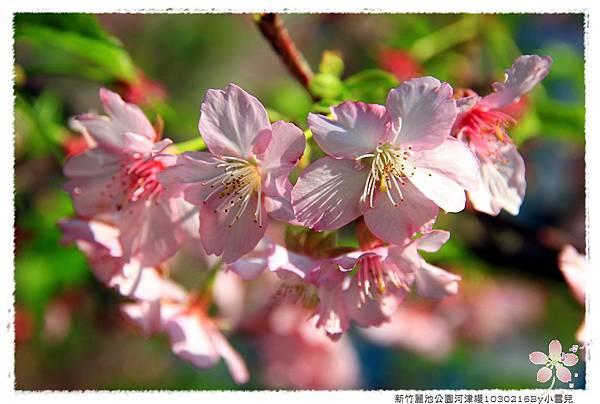 新竹麗池公園河津櫻1030216By小雪兒IMG_3614.JPG