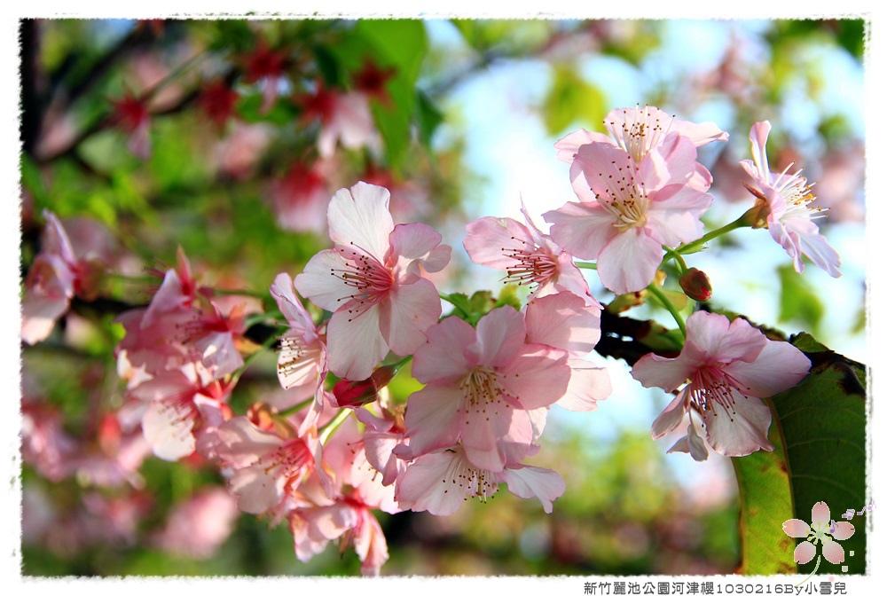 新竹麗池公園河津櫻1030216By小雪兒IMG_3623.JPG