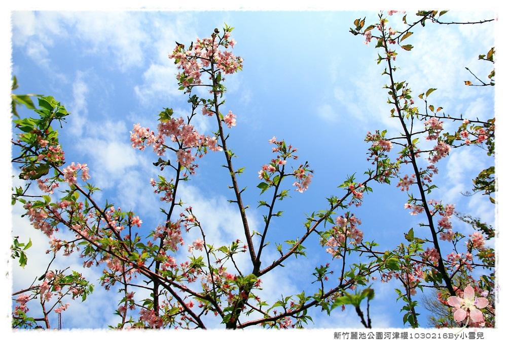 新竹麗池公園河津櫻1030216By小雪兒IMG_3632.JPG