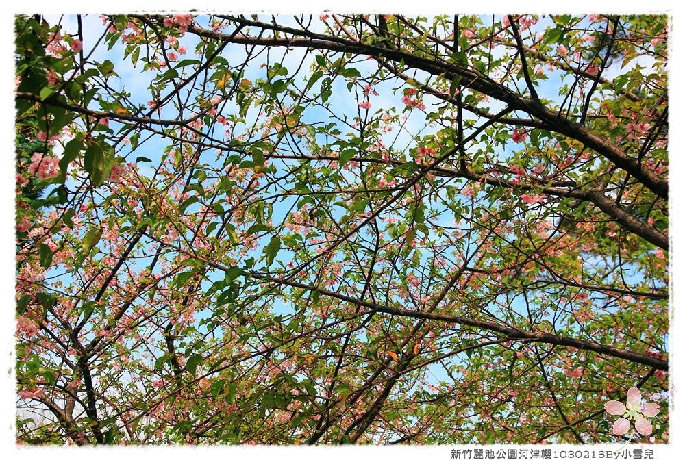 新竹麗池公園河津櫻1030216By小雪兒IMG_3634.JPG