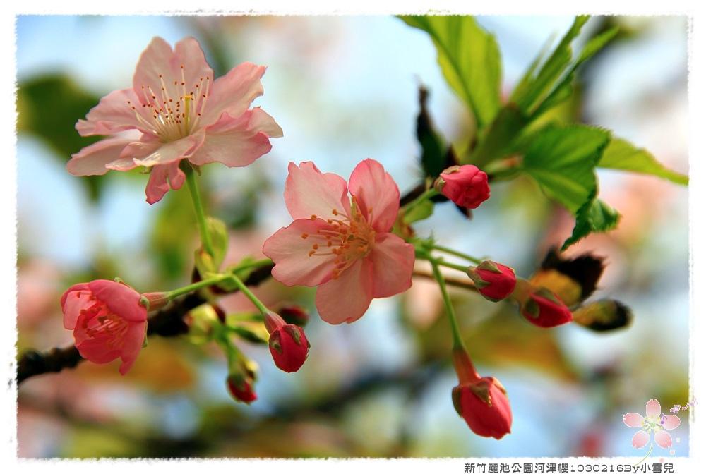 新竹麗池公園河津櫻1030216By小雪兒IMG_3638.JPG