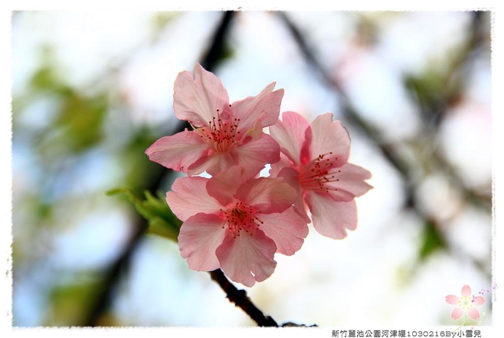 新竹麗池公園河津櫻1030216By小雪兒IMG_3646.JPG
