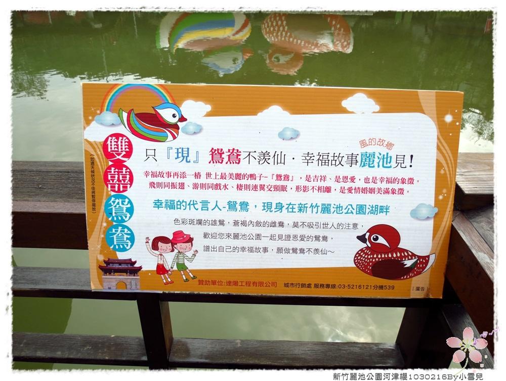 新竹麗池公園河津櫻1030216By小雪兒IMG_7106.JPG