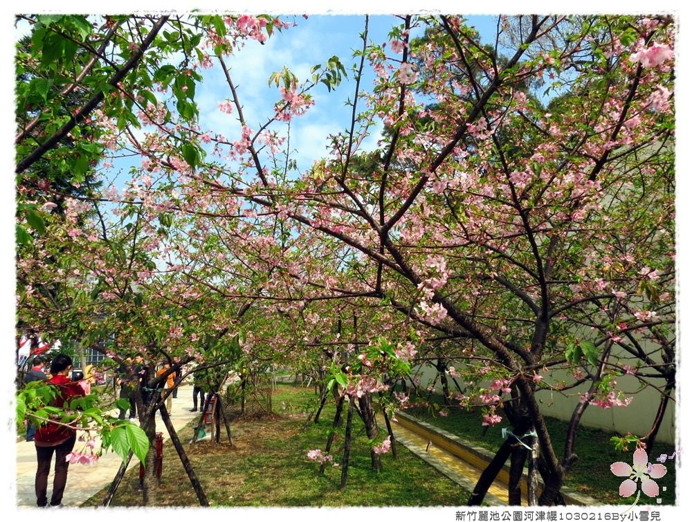 新竹麗池公園河津櫻1030216By小雪兒IMG_7245.JPG