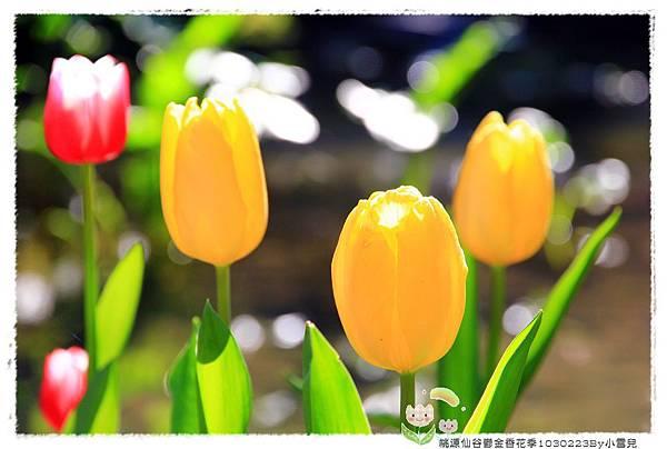 桃源仙谷鬱金香花季1030223By小雪兒IMG_3801.JPG