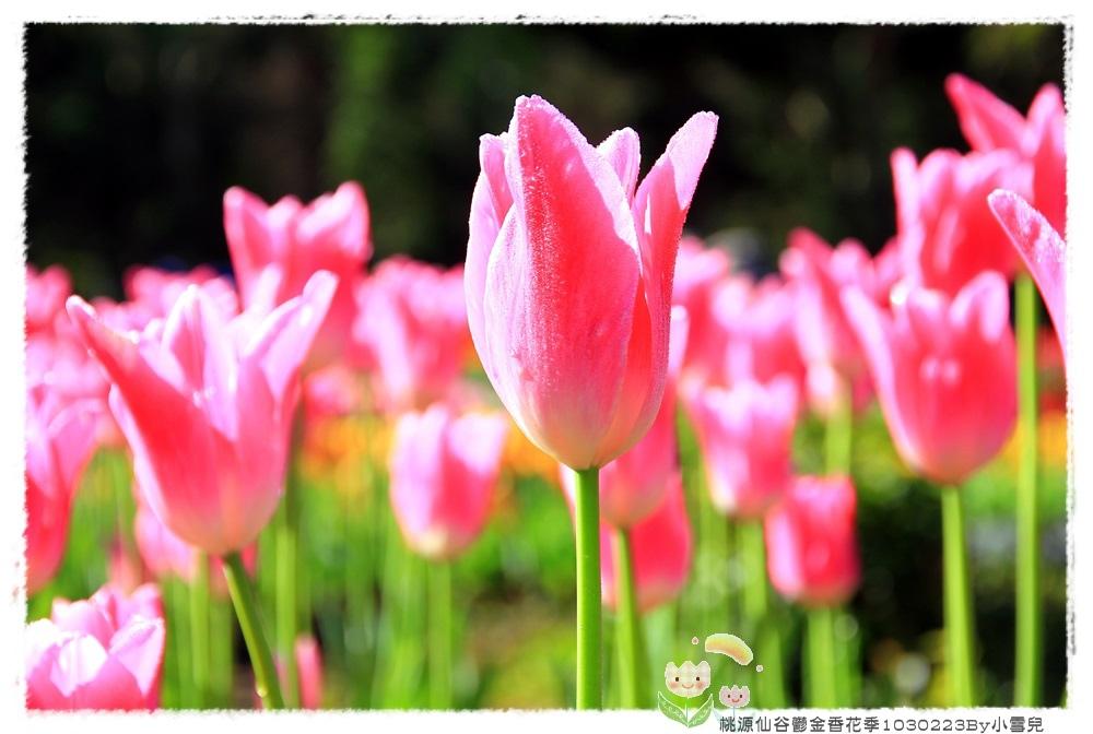 桃源仙谷鬱金香花季1030223By小雪兒IMG_3842.JPG