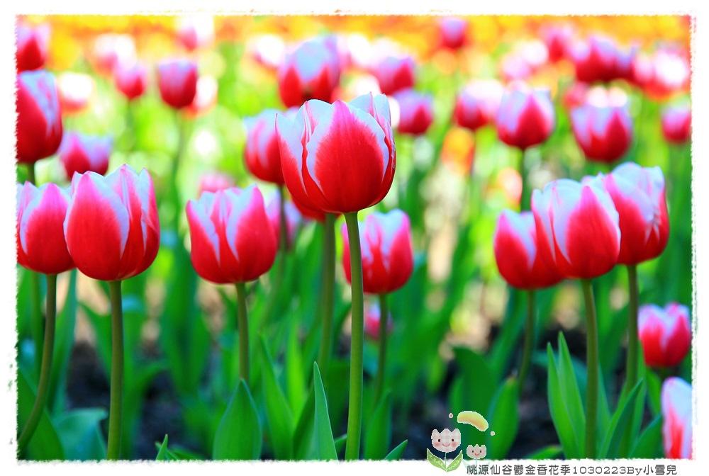 桃源仙谷鬱金香花季1030223By小雪兒IMG_3991.JPG